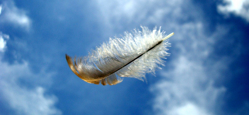 Image result for feather on wind