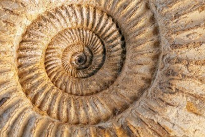 closeup-of-an-ammonite