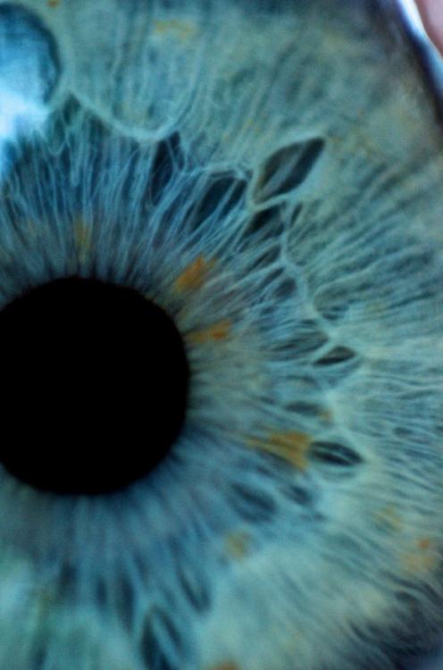 pupil & iris