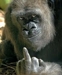gorilla finger