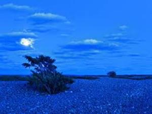 blue savannah 1