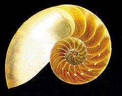 nautilus- flopped