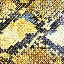 snakeskin 1