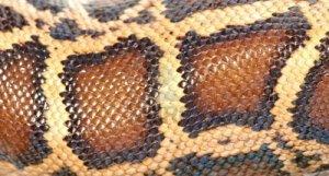 snakeskin 3