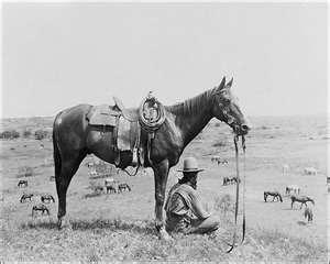 old west reins