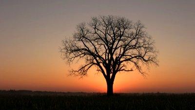 tree-with-morning-sunrise