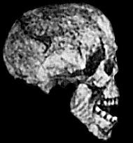 reck_skull