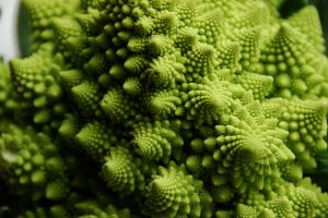 1024px-Flickr_-_cyclonebill_-_Romanesco
