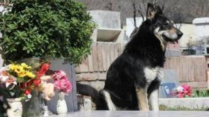 Capitan-dog-550x308