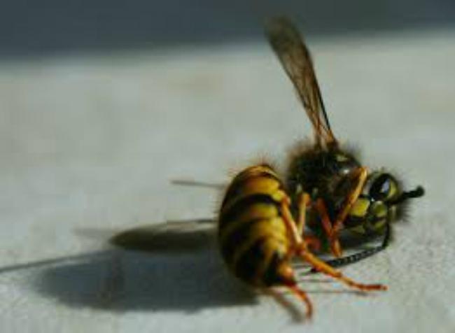 dead-bee