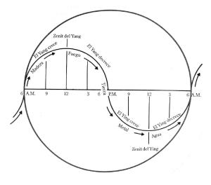 yin-yang-evoluciona